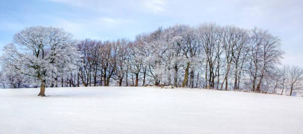 Photograph - Winter Oak by David Birchall