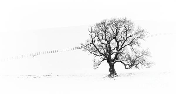 Photograph - Winter Oak Tree by Tim Gainey