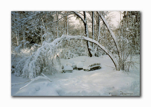Photograph - Winter Of '98-ny by Ericamaxine Price
