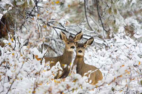 Photograph - Winter Pair by Steve Krull