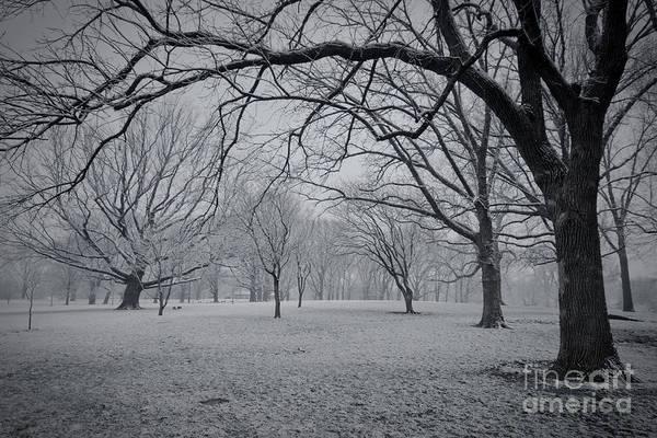 Photograph - Winter Park by Ryan Heffron