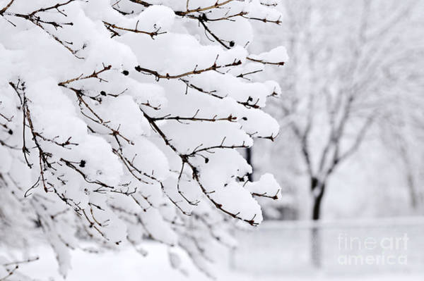 January Photograph - Winter Park Under Heavy Snow by Elena Elisseeva