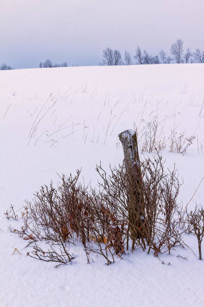 Photograph - Winter Pastures by Jeff Sinon