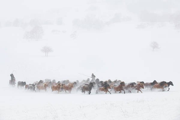 Herd Photograph - Winter Pastures by Tony Xu