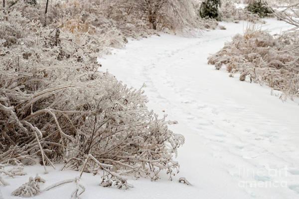 Photograph - Winter Path by Les Palenik