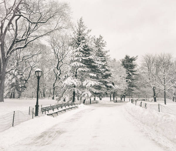 Wall Art - Photograph - Winter Path - Snow Covered Trees In Central Park by Vivienne Gucwa