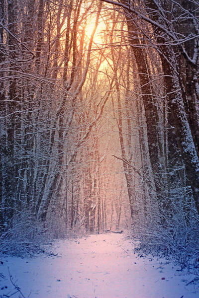 Wall Art - Photograph - Winter Pathway by Rob Blair