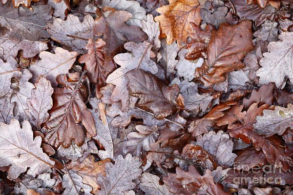 Photograph - Winter by Paul Cowan
