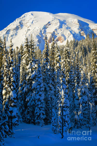 Snowshoe Photograph - Winter Peak by Inge Johnsson