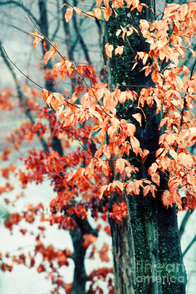 Fall Photograph - Winter Rain by Kim Fearheiley