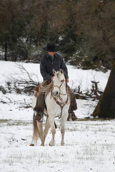 Photograph - Winter Riding by Diane Bohna