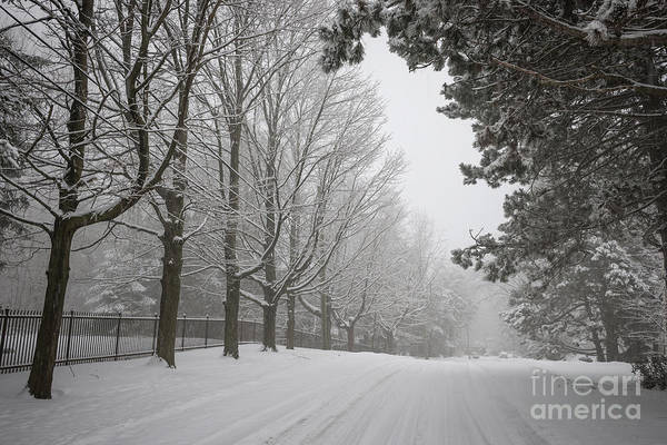 Neighborhood Photograph - Winter Road by Elena Elisseeva