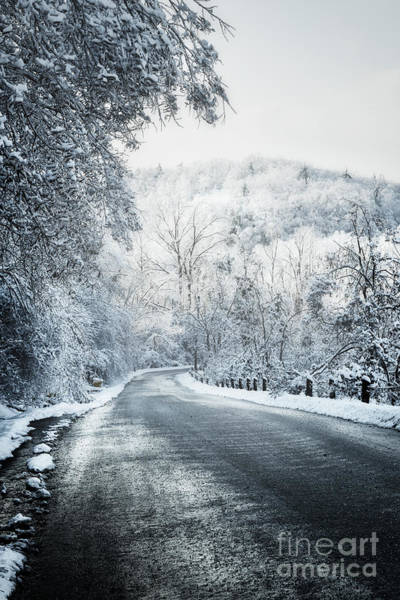 Wall Art - Photograph - Winter Road In Forest by Elena Elisseeva