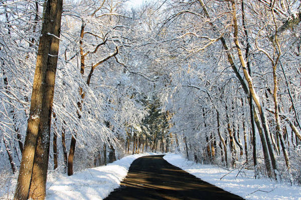Photograph - Winter Road by Jackson Pearson