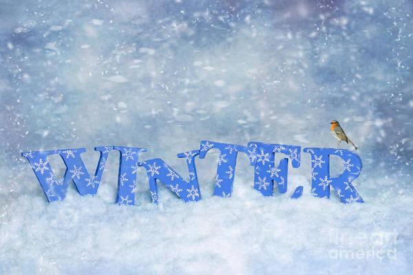 Snowflake Photograph - Winter Robin by Amanda Elwell