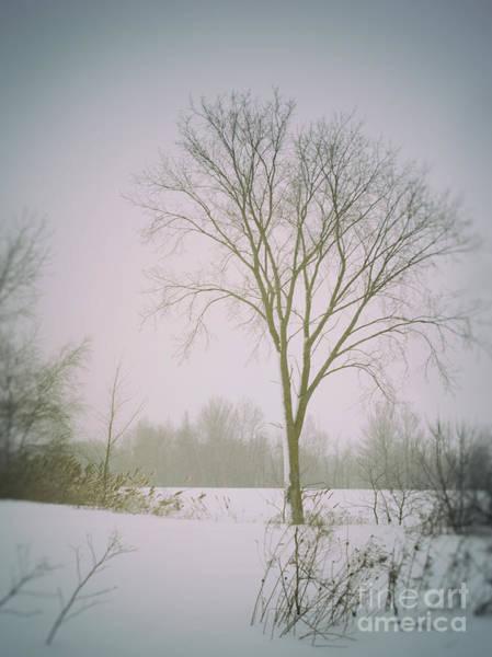 Photograph - Winter Rural Scene by Sandra Cunningham