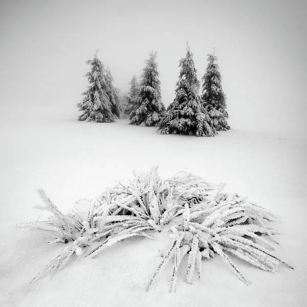 Simplicity Wall Art - Photograph - Winter Scenery by Daniel ?e?icha