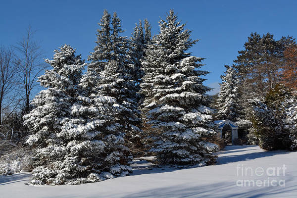Photograph - Winter Scenic Landscape by Gary Keesler