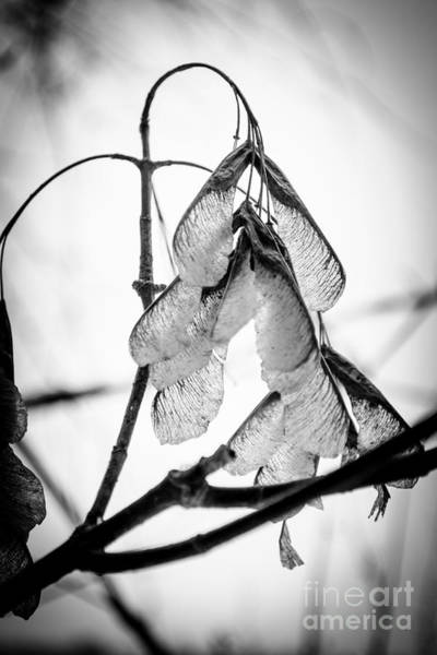 Photograph - Winter Seeds by Michael Arend
