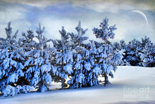 Art Print featuring the photograph Winter Serenity  by Andrea Kollo