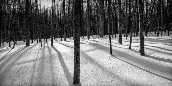 Photograph - Winter Shadows by Jeff Sinon