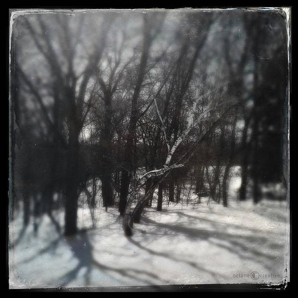 Photograph - Winter Shadows by Tim Nyberg