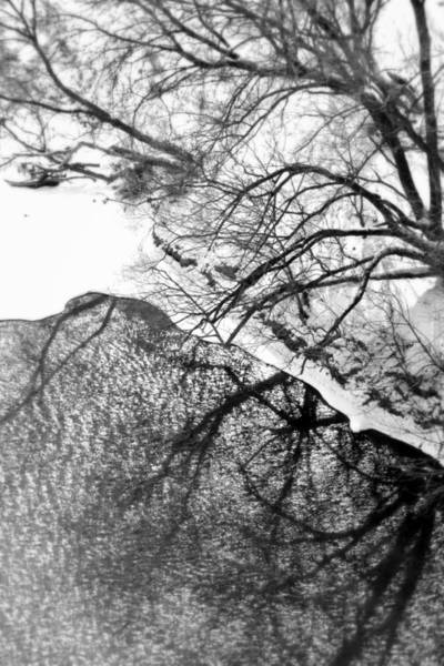 Wall Art - Photograph - Winter Shadows by Valentino Visentini
