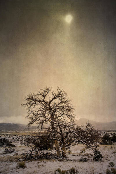 Photograph - Winter Sky by Lou  Novick