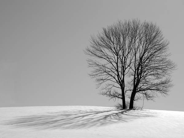 Photograph - Winter - Snow Trees 2 In Mono by Richard Reeve
