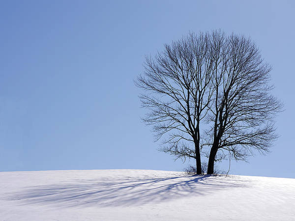 Photograph - Winter - Snow Trees 2 by Richard Reeve