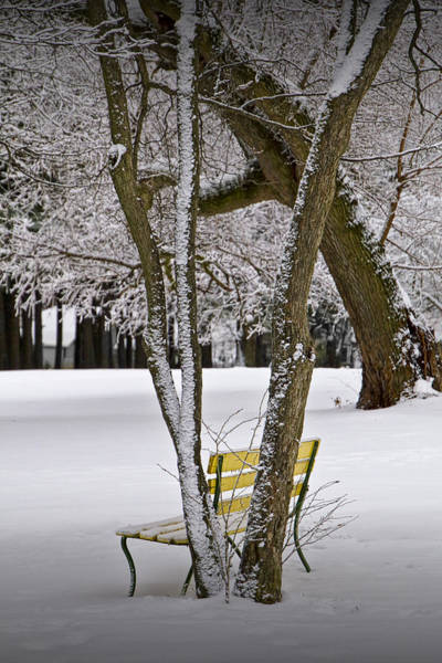 Photograph - Winter Snowfall At Garfield Park With Yellow Park Bench No. 0963 by Randall Nyhof