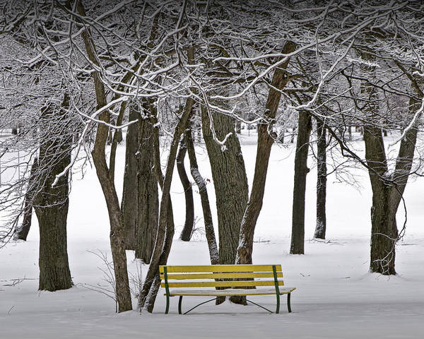 Photograph - Winter Snowfall At Garfield Park With Yellow Park Bench No. 1072 by Randall Nyhof