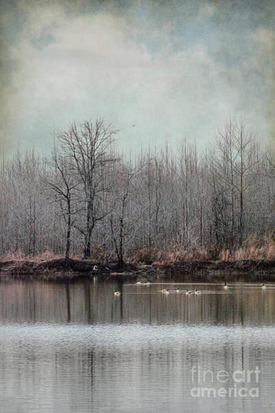Photograph - Winter Solitude by Jai Johnson