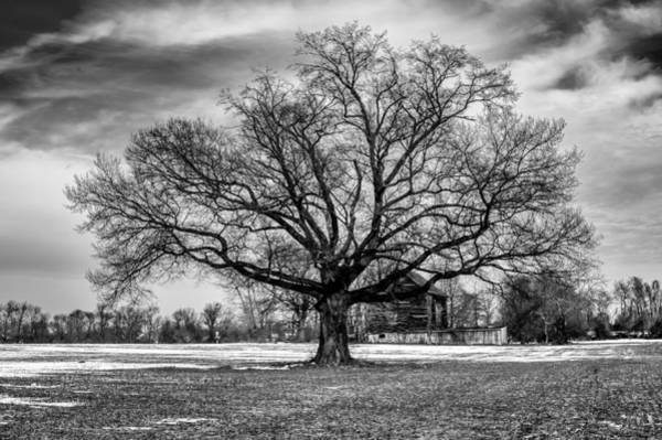 Photograph - Winter Solstice Tree by Louis Dallara
