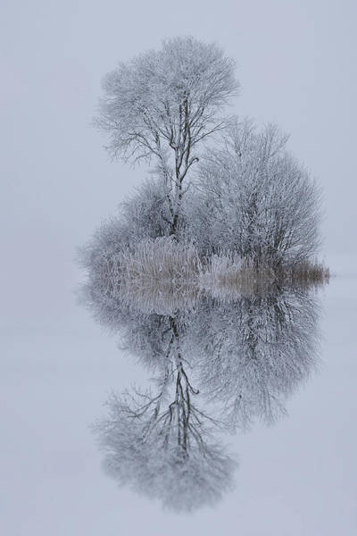 Frost Wall Art - Photograph - Winter Stillness by Norbert Maier