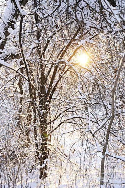 Photograph - Winter Sun by Larry Ricker