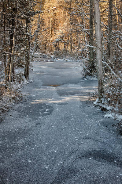 Photograph - Winter Sun On Trees by Denise Bush