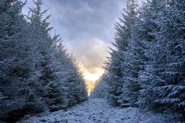 Photograph - Winter Trail by Brian Grzelewski