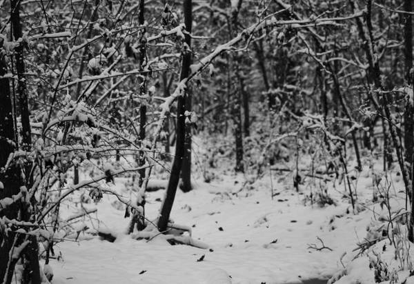 First Snowfall Wall Art - Photograph - Winter Trailhead by Dan Sproul