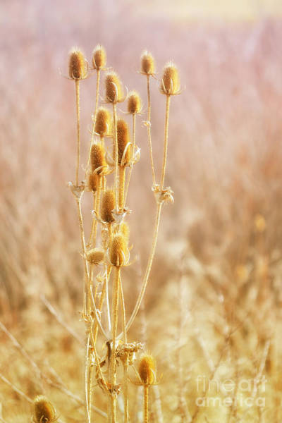 Photograph - Winter Treasure by Elle Arden Walby