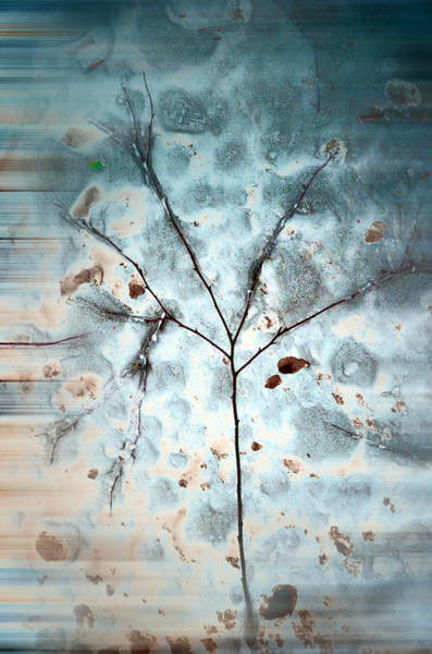 Photograph - Winter Tree Abstract by Beth Sawickie