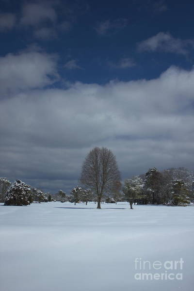 Photograph - Winter Tree by Amazing Jules