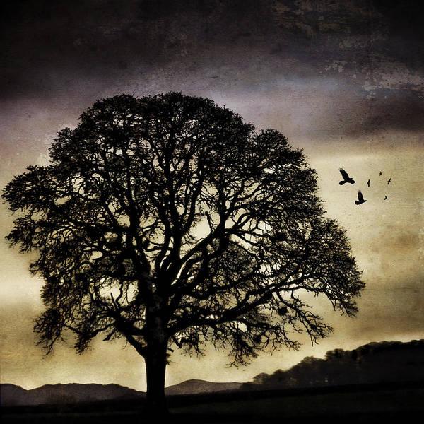 Winter Tree And Ravens Art Print