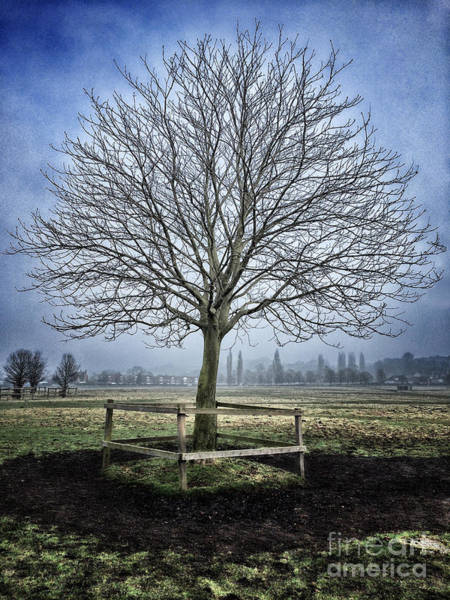 Wall Art - Photograph - Winter Tree by Colin and Linda McKie