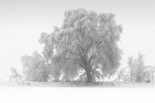 Photograph - Winter Tree by David Andersen