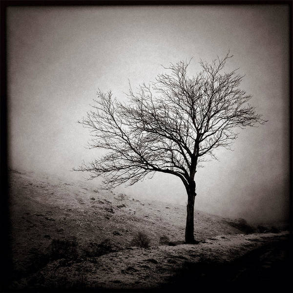 Iphoneography Wall Art - Photograph - Winter Tree by Dave Bowman