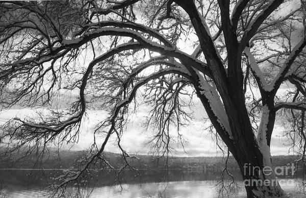 North Idaho Photograph - Winter Tree by Idaho Scenic Images Linda Lantzy