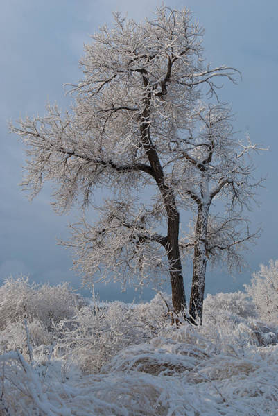 Photograph - Winter Tree In A Blue And White World by Cascade Colors