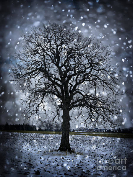 Wall Art - Photograph - Winter Tree In Snowfall by Elena Elisseeva