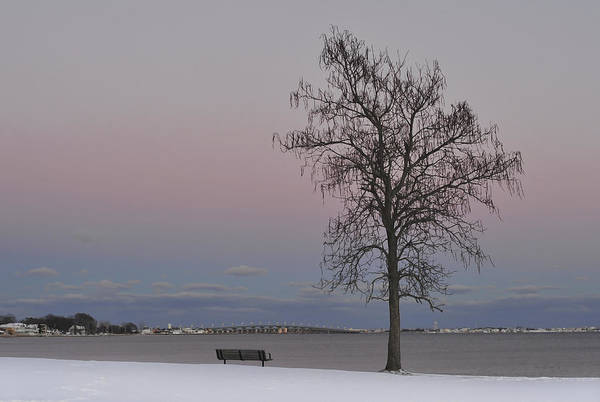 Photograph - Winter Tree Island Heights Nj by Terry DeLuco